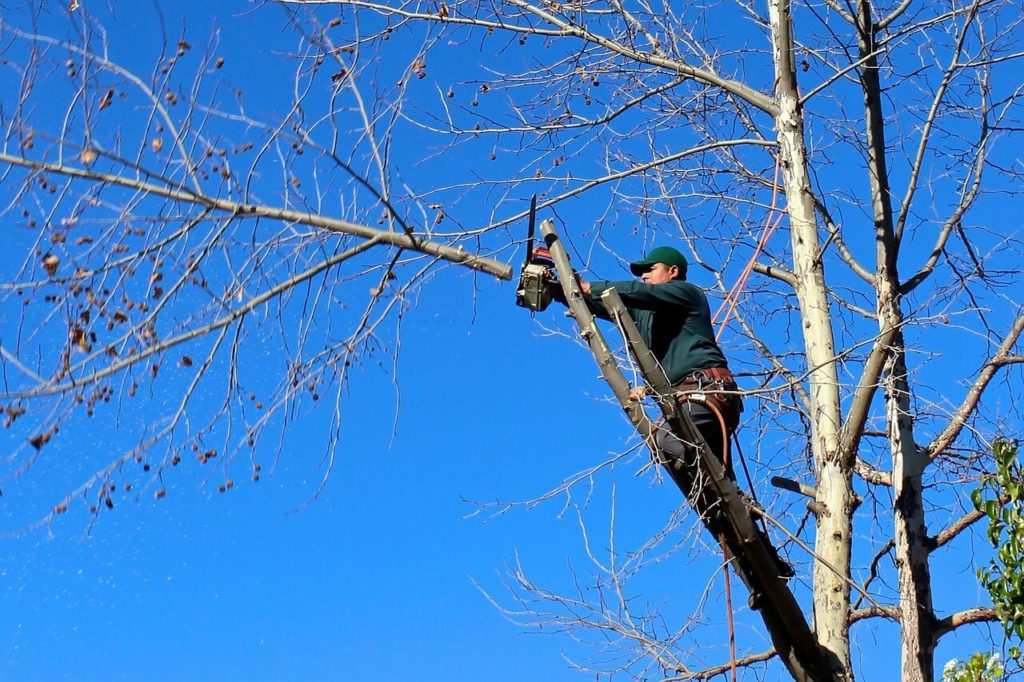Contact Us-Augusta Tree Trimming and Stump Grinding Services-We Offer Tree Trimming Services, Tree Removal, Tree Pruning, Tree Cutting, Residential and Commercial Tree Trimming Services, Storm Damage, Emergency Tree Removal, Land Clearing, Tree Companies, Tree Care Service, Stump Grinding, and we're the Best Tree Trimming Company Near You Guaranteed!
