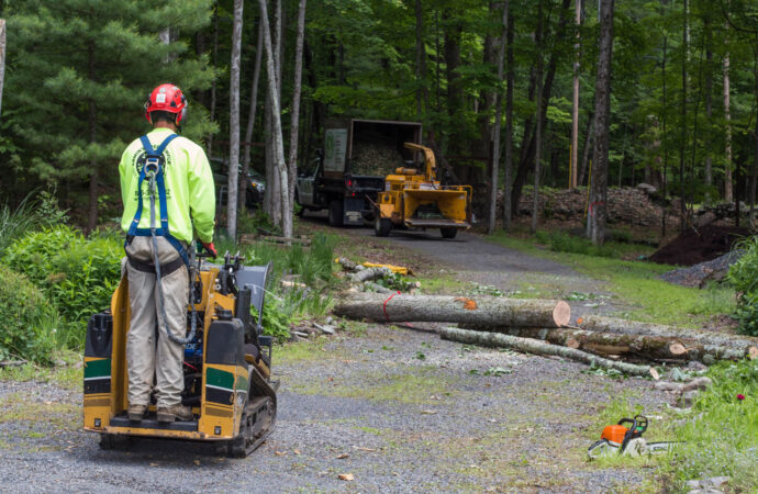 Emergency Tree Removal-Augusta Tree Trimming and Stump Grinding Services-We Offer Tree Trimming Services, Tree Removal, Tree Pruning, Tree Cutting, Residential and Commercial Tree Trimming Services, Storm Damage, Emergency Tree Removal, Land Clearing, Tree Companies, Tree Care Service, Stump Grinding, and we're the Best Tree Trimming Company Near You Guaranteed!