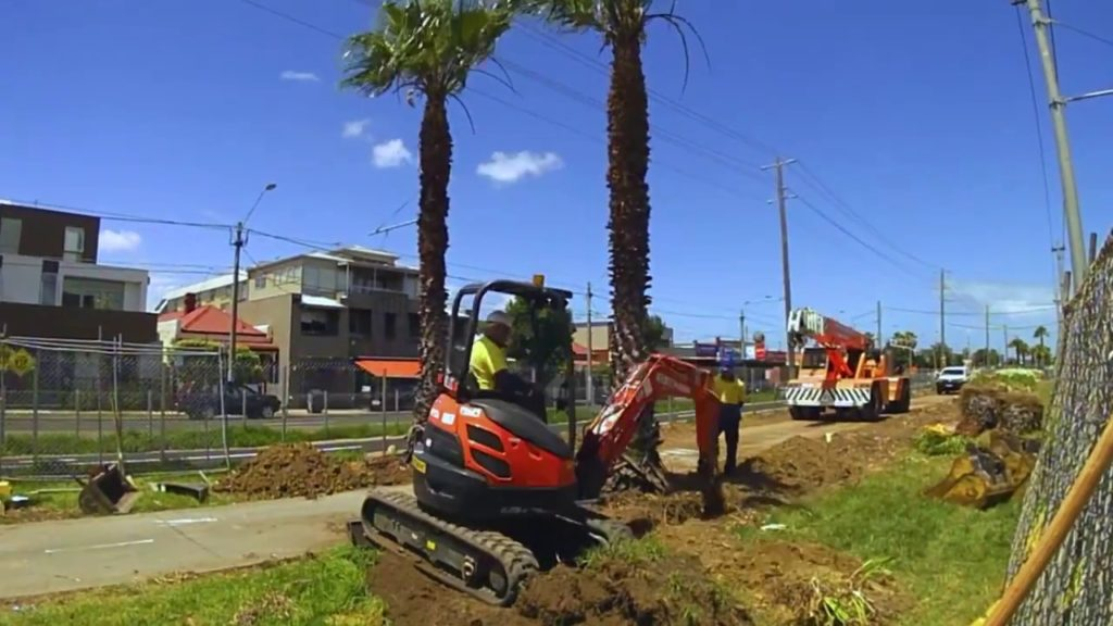Palm Tree Removal-Augusta Tree Trimming and Stump Grinding Services-We Offer Tree Trimming Services, Tree Removal, Tree Pruning, Tree Cutting, Residential and Commercial Tree Trimming Services, Storm Damage, Emergency Tree Removal, Land Clearing, Tree Companies, Tree Care Service, Stump Grinding, and we're the Best Tree Trimming Company Near You Guaranteed!