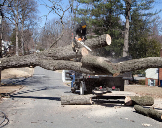 Residential Tree Services-Augusta Tree Trimming and Stump Grinding Services-We Offer Tree Trimming Services, Tree Removal, Tree Pruning, Tree Cutting, Residential and Commercial Tree Trimming Services, Storm Damage, Emergency Tree Removal, Land Clearing, Tree Companies, Tree Care Service, Stump Grinding, and we're the Best Tree Trimming Company Near You Guaranteed!
