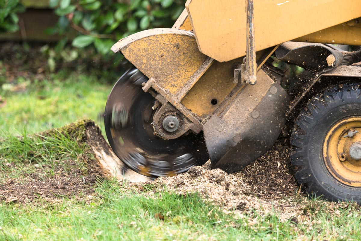 Stump Grinding-Augusta Tree Trimming and Stump Grinding Services-We Offer Tree Trimming Services, Tree Removal, Tree Pruning, Tree Cutting, Residential and Commercial Tree Trimming Services, Storm Damage, Emergency Tree Removal, Land Clearing, Tree Companies, Tree Care Service, Stump Grinding, and we're the Best Tree Trimming Company Near You Guaranteed!