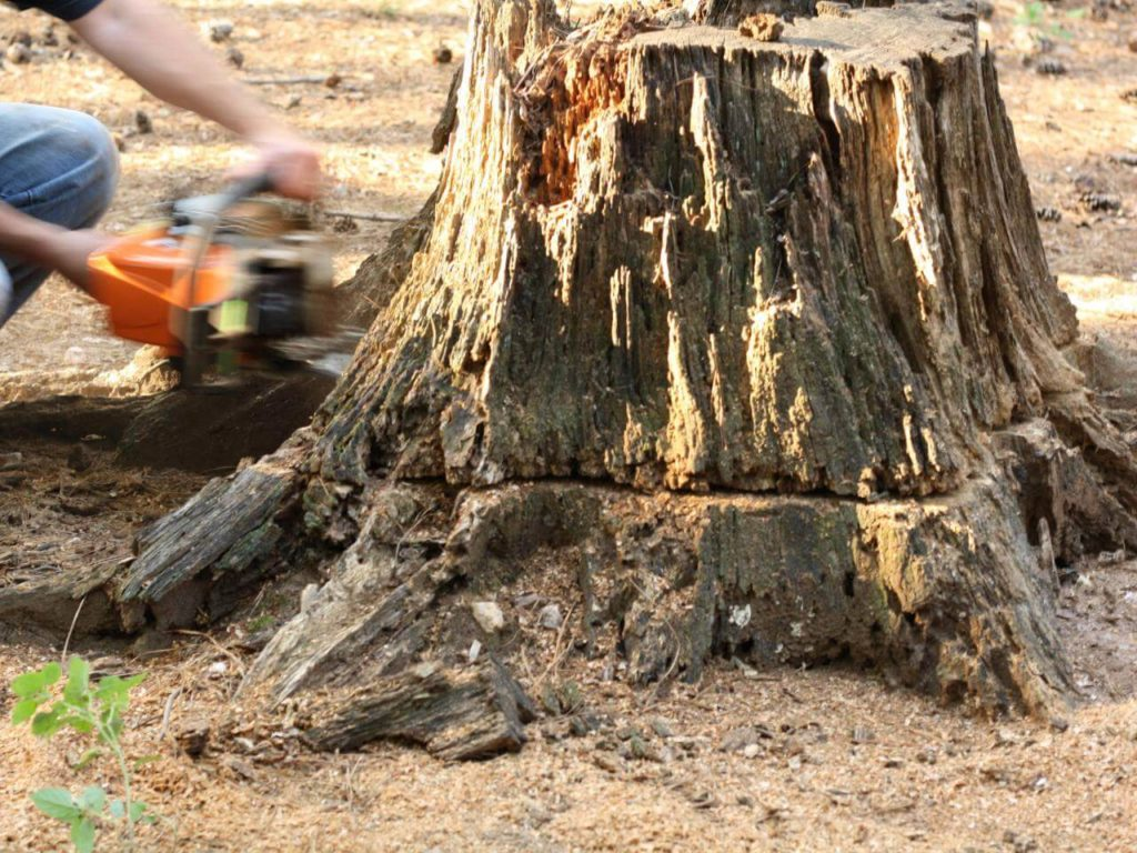Stump Removal-Augusta Tree Trimming and Stump Grinding Services-We Offer Tree Trimming Services, Tree Removal, Tree Pruning, Tree Cutting, Residential and Commercial Tree Trimming Services, Storm Damage, Emergency Tree Removal, Land Clearing, Tree Companies, Tree Care Service, Stump Grinding, and we're the Best Tree Trimming Company Near You Guaranteed!