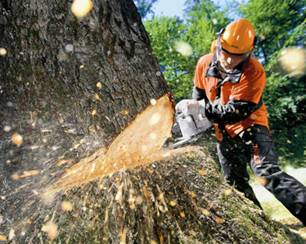 Tree Cutting-Augusta Tree Trimming and Stump Grinding Services-We Offer Tree Trimming Services, Tree Removal, Tree Pruning, Tree Cutting, Residential and Commercial Tree Trimming Services, Storm Damage, Emergency Tree Removal, Land Clearing, Tree Companies, Tree Care Service, Stump Grinding, and we're the Best Tree Trimming Company Near You Guaranteed!
