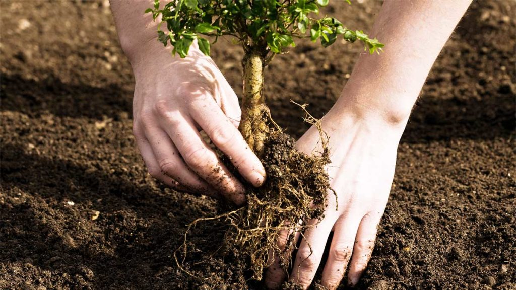 Tree Planting-Augusta Tree Trimming and Stump Grinding Services-We Offer Tree Trimming Services, Tree Removal, Tree Pruning, Tree Cutting, Residential and Commercial Tree Trimming Services, Storm Damage, Emergency Tree Removal, Land Clearing, Tree Companies, Tree Care Service, Stump Grinding, and we're the Best Tree Trimming Company Near You Guaranteed!
