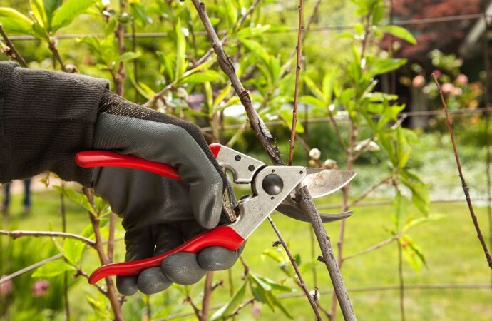 Tree Pruning-Augusta Tree Trimming and Stump Grinding Services-We Offer Tree Trimming Services, Tree Removal, Tree Pruning, Tree Cutting, Residential and Commercial Tree Trimming Services, Storm Damage, Emergency Tree Removal, Land Clearing, Tree Companies, Tree Care Service, Stump Grinding, and we're the Best Tree Trimming Company Near You Guaranteed!