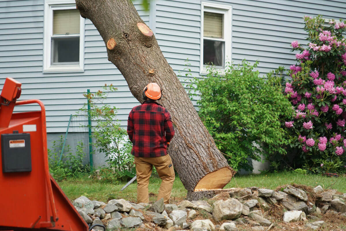 Tree Removal-Augusta Tree Trimming and Stump Grinding Services-We Offer Tree Trimming Services, Tree Removal, Tree Pruning, Tree Cutting, Residential and Commercial Tree Trimming Services, Storm Damage, Emergency Tree Removal, Land Clearing, Tree Companies, Tree Care Service, Stump Grinding, and we're the Best Tree Trimming Company Near You Guaranteed!
