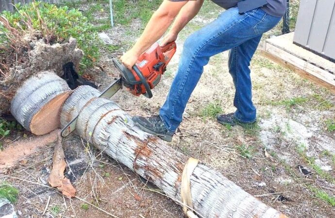 Evans-Augusta Tree Trimming and Stump Grinding Services-We Offer Tree Trimming Services, Tree Removal, Tree Pruning, Tree Cutting, Residential and Commercial Tree Trimming Services, Storm Damage, Emergency Tree Removal, Land Clearing, Tree Companies, Tree Care Service, Stump Grinding, and we're the Best Tree Trimming Company Near You Guaranteed!