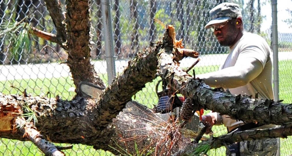 Harlem-Augusta Tree Trimming and Stump Grinding Services-We Offer Tree Trimming Services, Tree Removal, Tree Pruning, Tree Cutting, Residential and Commercial Tree Trimming Services, Storm Damage, Emergency Tree Removal, Land Clearing, Tree Companies, Tree Care Service, Stump Grinding, and we're the Best Tree Trimming Company Near You Guaranteed!