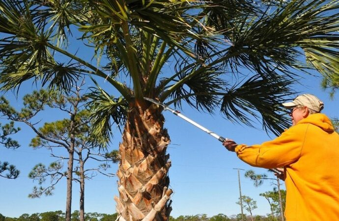 Thomson-Augusta Tree Trimming and Stump Grinding Services-We Offer Tree Trimming Services, Tree Removal, Tree Pruning, Tree Cutting, Residential and Commercial Tree Trimming Services, Storm Damage, Emergency Tree Removal, Land Clearing, Tree Companies, Tree Care Service, Stump Grinding, and we're the Best Tree Trimming Company Near You Guaranteed!